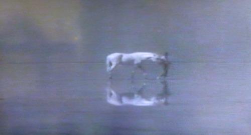 白い馬17n2g9n