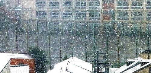 雪16n11g24n0b▲twitter