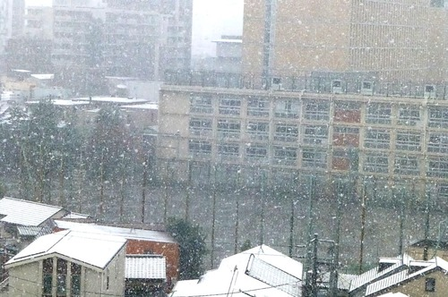 雪16n11g24n0▲twitter