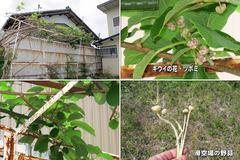 20052-3-草刈-05
