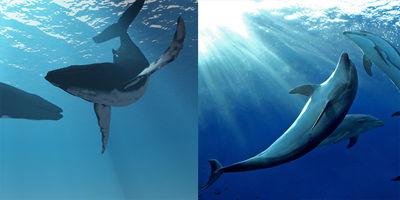20141125クジラとイルカ