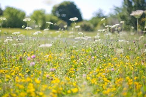 wildflowers-554122_960_720