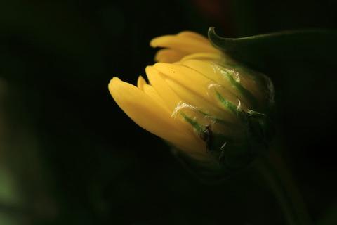 flower-1821392_960_720
