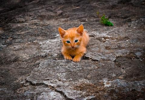 cat-3442257_960_720