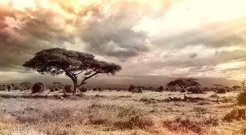 africa-944465_960_720