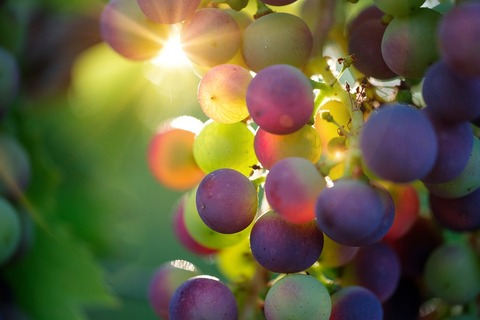 grapes-3550733_960_720