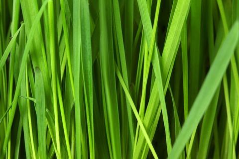 grass-16044_1280