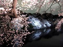 2010sakura 002