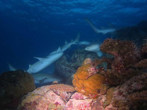 maldives6d6.jpg