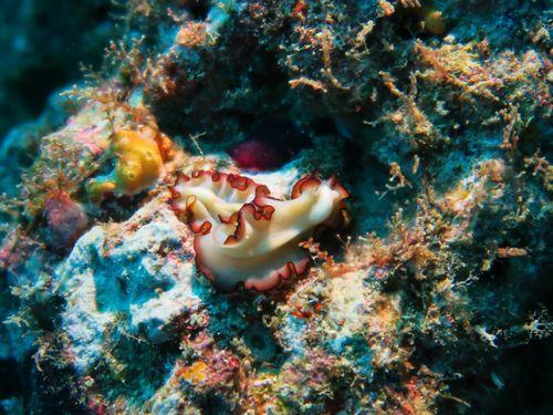 maldives6b3.jpg