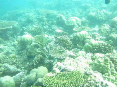Maldives5d5.jpg