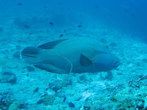 maldives6c3.jpg