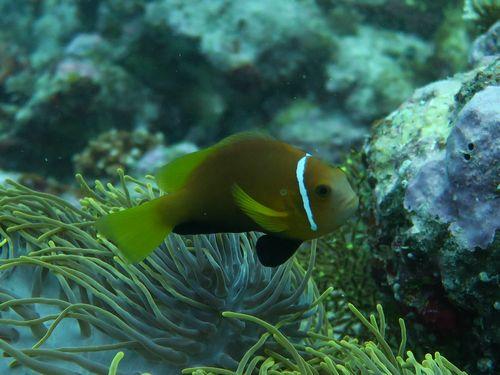maldives684.jpg