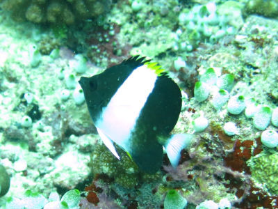 Maldives5c8.jpg
