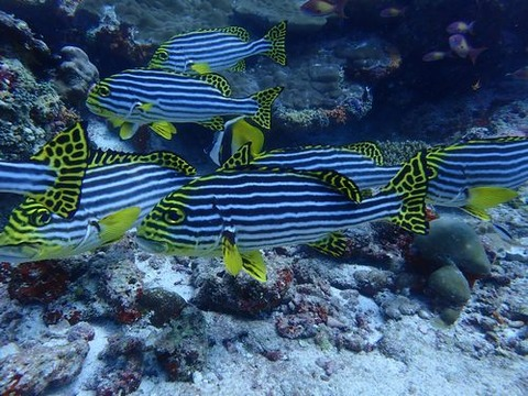 maldives746
