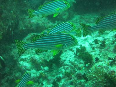 Maldives5i9.jpg