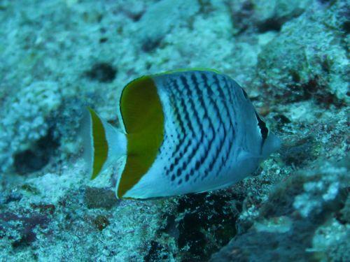 maldives671.jpg