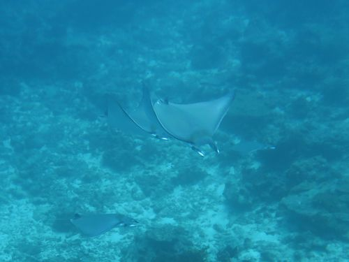 maldives681.jpg