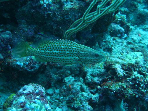 maldives695.jpg