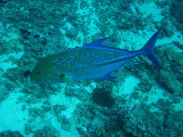 maldives351.jpg
