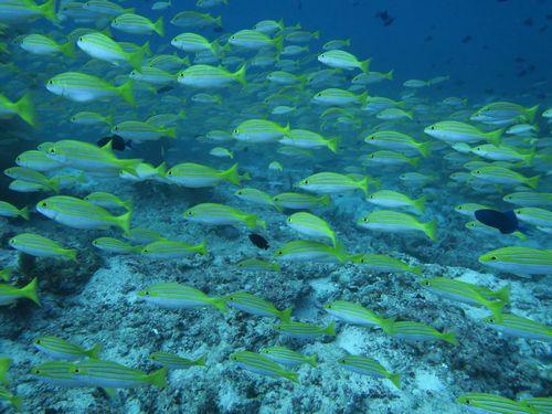 maldives665.jpg