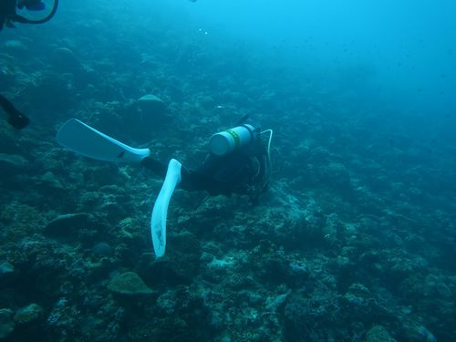 maldives683.jpg