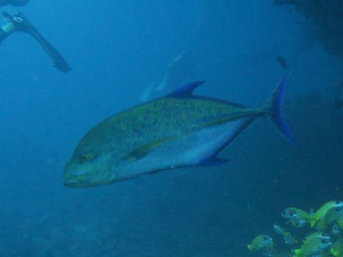 maldives692.jpg