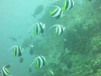Maldives5i1.jpg
