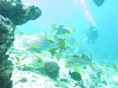 Maldives5c9.jpg