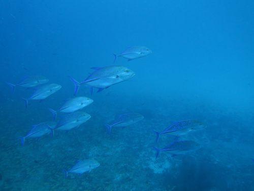maldives670.jpg