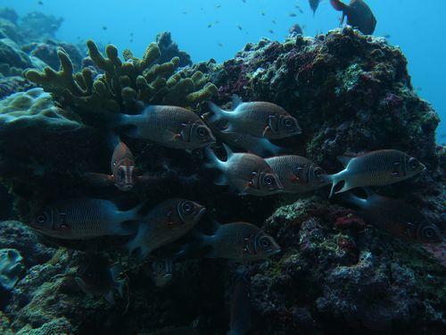 maldives6a2.jpg