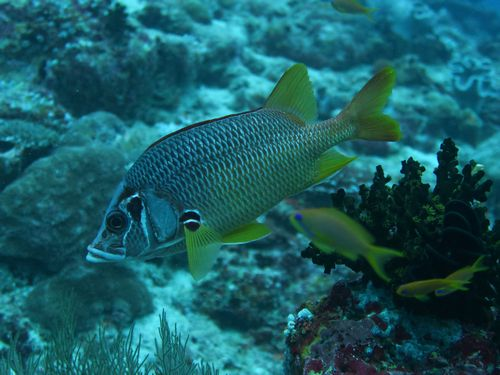 maldives694.jpg