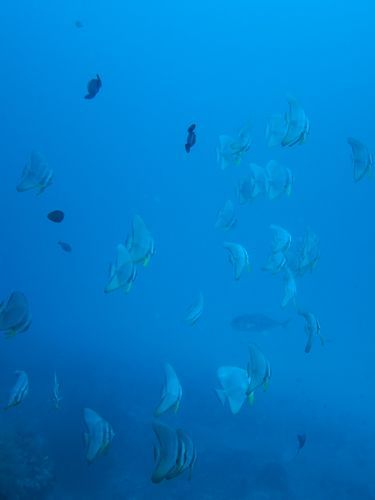 maldives667.jpg