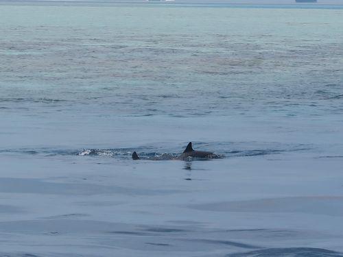 maldives6c2.jpg