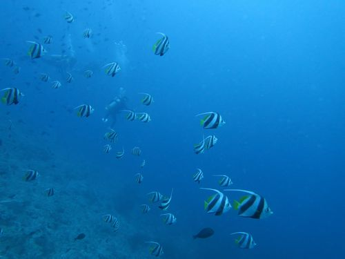 maldives669.jpg