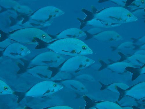 maldives693.jpg