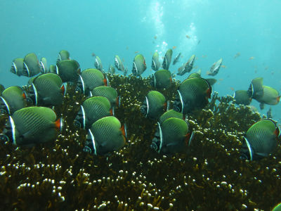 Maldives5g0.jpg