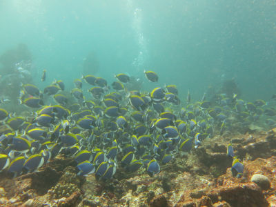 Maldives5g4.jpg