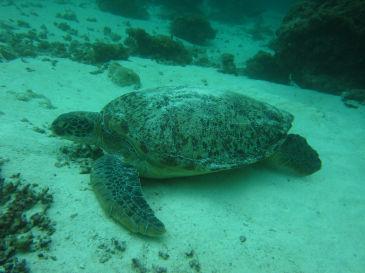 maldives360.jpg