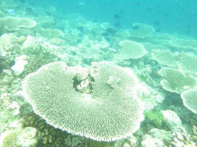 Maldives5d6.jpg