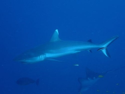maldives744