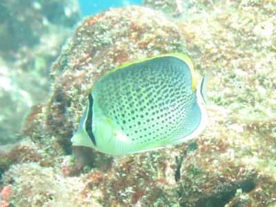 Maldives5d0.jpg