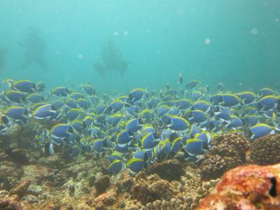 Maldives5g3.jpg
