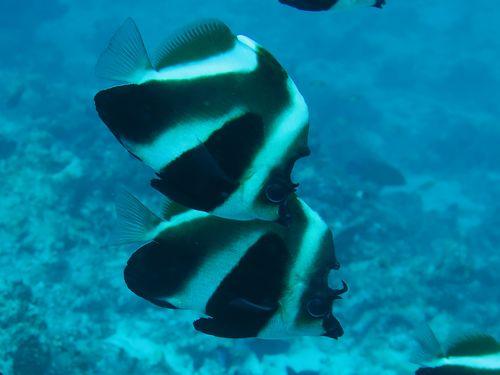 maldives699.jpg
