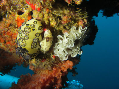 Maldives5c4.jpg