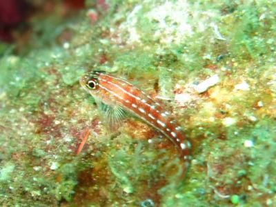 Maldives5j1.jpg