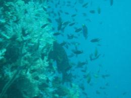 ドロップオフの魚の群れ