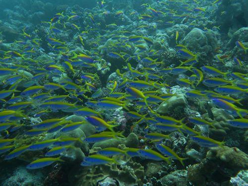 maldives686.jpg