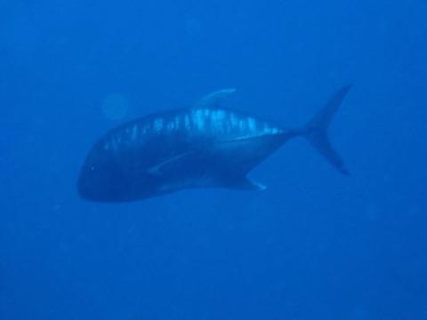 maldives743