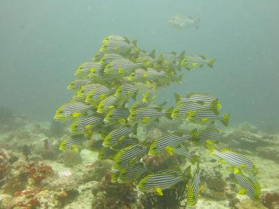Maldives5f9.jpg